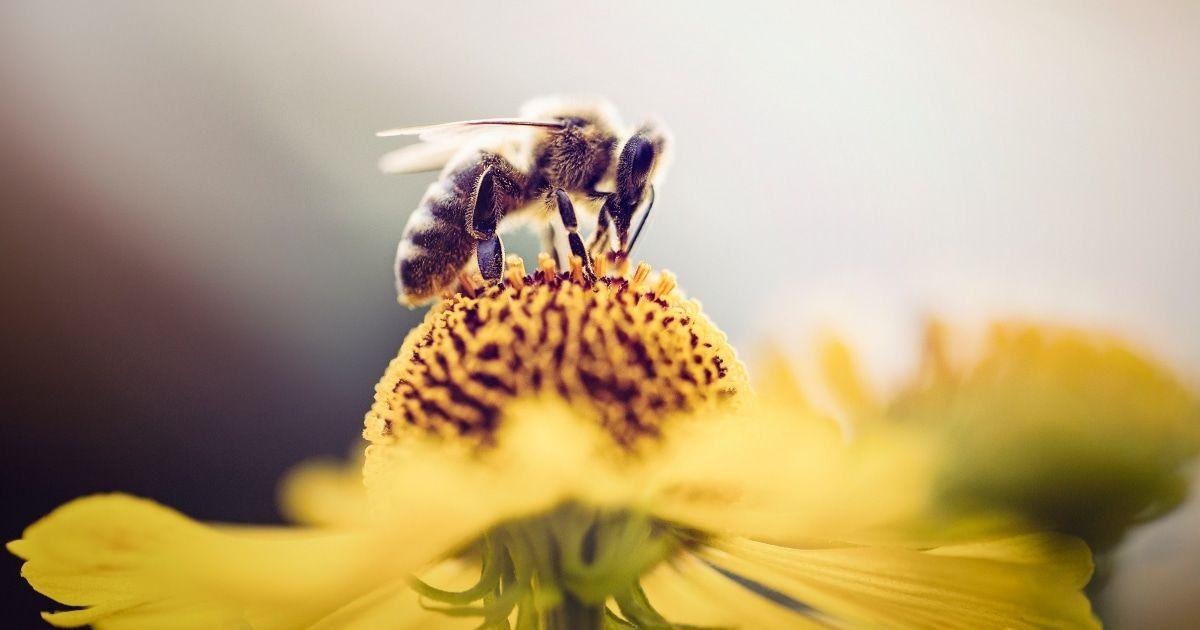 140 Buzzy Bee Puns i acudits amb prou còmica picada