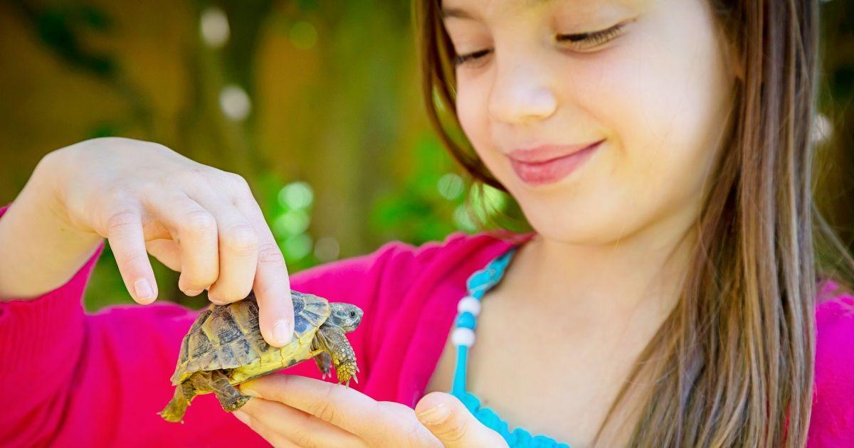 Ingyenes teknős színező oldalak gyerekeknek (és más tesztudin rajongóknak)