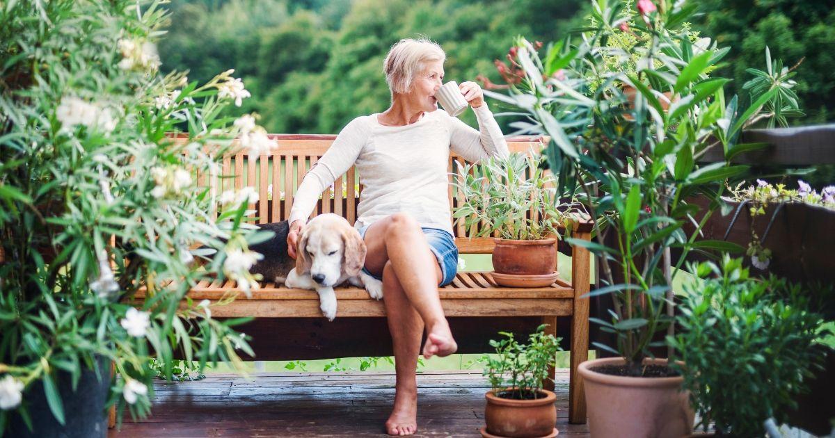 Най-добрите кучета за възрастни: 8 породи, идеални за възрастни и пенсионери